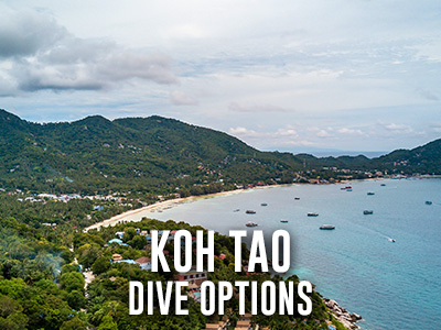 Koh Tao Dive options Koh Phangan